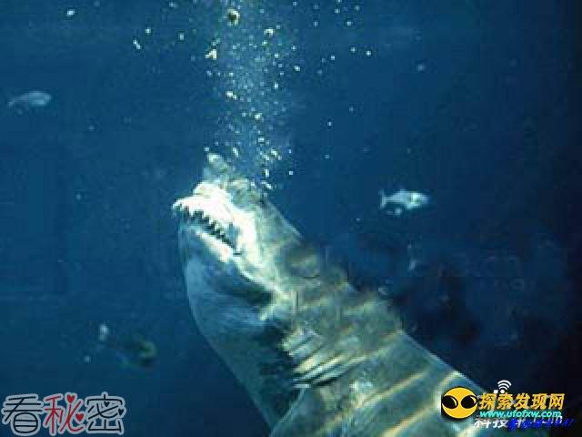 美佛罗里达现万条鲨鱼 官方紧急关闭沙滩