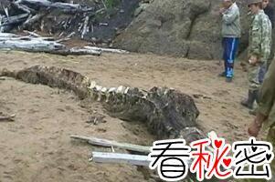 1944年松花江坠龙事件,渔民亲眼目睹黑龙坠落沙滩(身长20米)