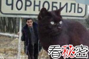 乌克兰巨猫是真的吗,世界上最大的猫Angie竟是网友恶搞