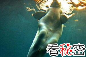 深海千年美人鱼儒艮,儒艮为什么叫美人鱼(美人鱼的原型)