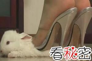 虐兔女残忍虐待兔子事件过程,20岁变态女将兔子活活踩死