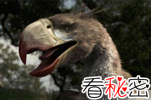史上最凶残鸟巨型恐怖鸟,高3米重200斤(巨爪可踩死人)