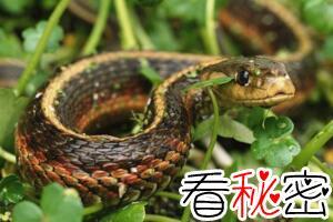 揭秘中国民间五毒是哪五毒,青蛇/蝎子/蜈蚣/壁虎/蟾蜍