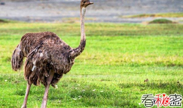 世界上最凶残的十种鸟类 第五专爱攻击人眼睛(惹不得)