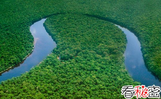 世界上最大的盆地:刚果盆地,地球最大基因库之一