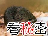 能够预测生死的老鼠