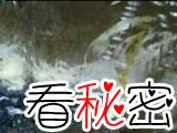 香港狐仙事件被证实 灵异程度堪比茶餐厅事件