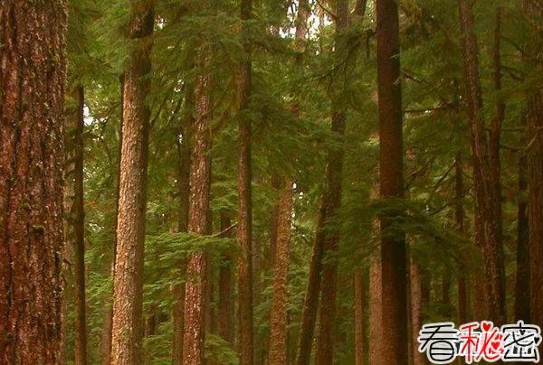哪个国家森林面积最大?世界森林面积最大的10个国家