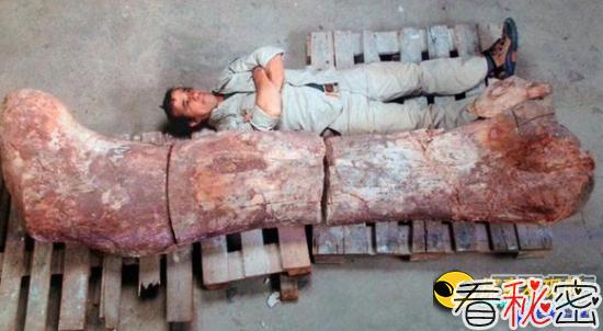 史上最大的恐龙化石 是大象的14倍重