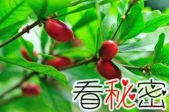 世界十大最罕见水果 第一可变酸为甜第九样子让人想歪