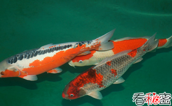 全世界捕捞量最多的10种鱼类 鲤鱼第四,第一你每天都在吃