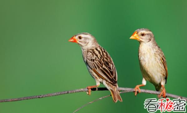 世界上什么鸟最多?揭秘世界上数量最多的十大鸟类