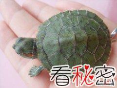 乌龟最长寿命是多少年?千年王八万年龟说法可信吗?