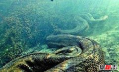 世界最长的蛇有多长?中国发现200米巨蟒真相揭秘
