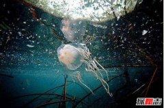 方水母和海蛇谁更毒?方水母三分钟毙命/海蛇一口毒液杀千人