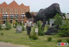 世界上最大的鹿:驼鹿体型像骆驼鹿角像铲子(长3米重1吨)