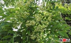 中国十大珍贵树种,第2香气特别第4中国特有仅剩3株