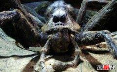 巨蜘蛛:相当恐怖的丛林猎杀者,吃人图片曝光(普通蜘蛛百倍大)