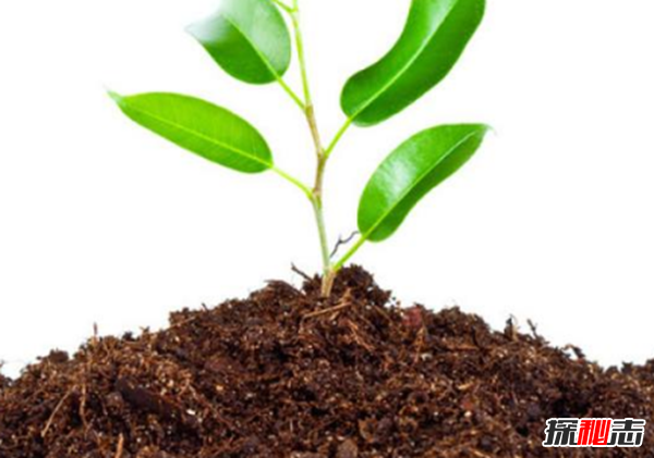 地球十大漂亮致命的植物,烟草被指定为心脏毒药