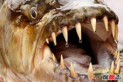 长相最恐怖的十种鱼类,个个长相丑陋可吓哭小孩(有图)