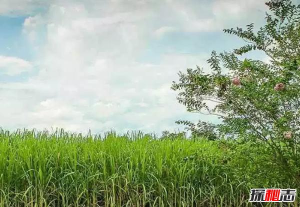 世界产糖大国排名:中国第三,美国最后
