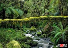 非洲最著名盆地:世界第一大盆地刚果盆地(资源丰富)