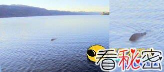 尼斯湖水怪再现 摄影师抓拍到巨大怪物露出水面