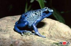 世界十大最恐怖动物 毒镖蛙美丽而邪恶一只毒死十个人