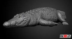 世界十大最大鳄鱼 咸水鳄体壮凶残会攻击人类