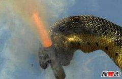世界第一巨蛇红海巨蛇 坦克大小巨蛇是否存在