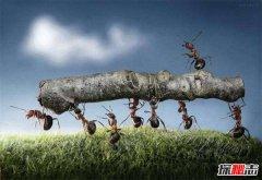 蚂蚁效应的哲学寓意 蚂蚁效应对人类的启发