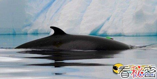 太震撼了:破解南冰洋怪异声音之谜