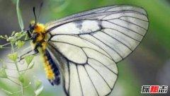 冰清绢蝶美丽的林中仙子 洁白无瑕十分动人