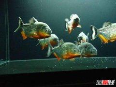 常见的冷水鱼有哪些?十大好看又好养的冷水鱼