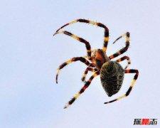家里有蜘蛛是福是祸?家里出现蜘蛛有什么寓意