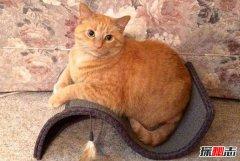 初次养猫养什么品种好?适合新手养的十种猫