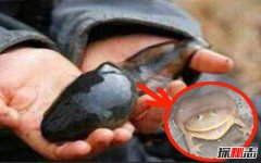 不合理蛙怎么生蝌蚪?不合理蛙是真的吗(可以返老还童)