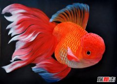 金鱼怎么养才不会死?养金鱼有哪些需要注意的小技巧