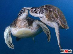 地球现有乌龟寿命排行 第一名寿命让人吃惊