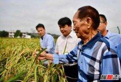 世界上最神奇特别的稻谷 海稻是在海水中生长的稻谷?