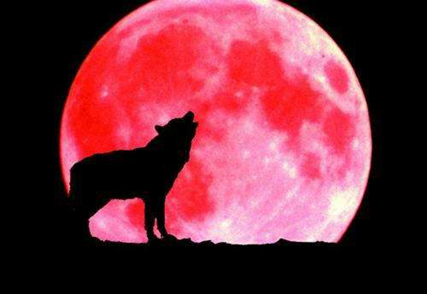 2019超级血狼月奇观 超级血狼月是怎么形成的?