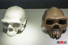 最早发现的直立人:爪哇猿人(1890年发现)