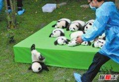 全世界只有中国有大熊猫吗?原因是什么呢?