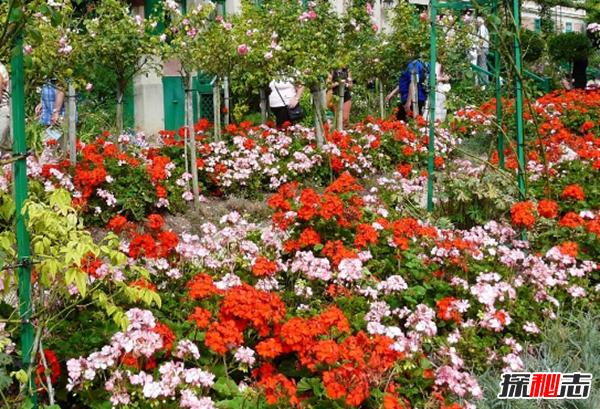 自家花园如何打理?10个花园养护小妙招