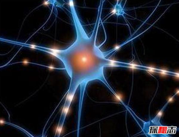 有史以来最小脑部是多小?谁的脑袋?