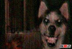 微笑狗事件死了多少人?揭秘微笑狗的恐怖之处(科学解释)
