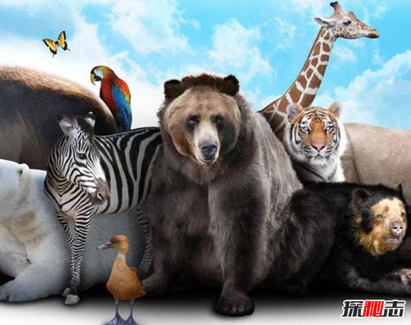 聪明的动物有哪些?盘点世界上最聪明的十二种动物(大开眼界)