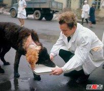前苏联砍了狗头恐怖实验 惊悚双头狗实验揭秘(成功存活)