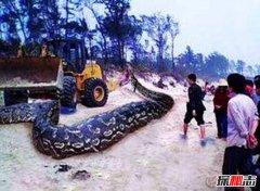 云南修路挖出18米大蛇 挖蛇司机路上心梗死亡