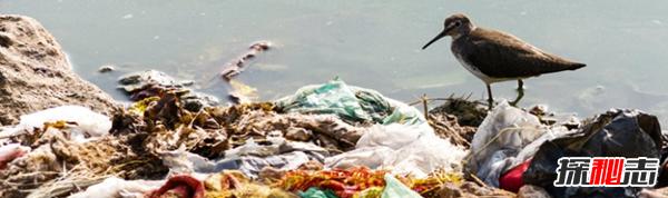 环境污染有哪些?环境污染对人类的十大恶果